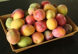 dehydrated mangos (5)