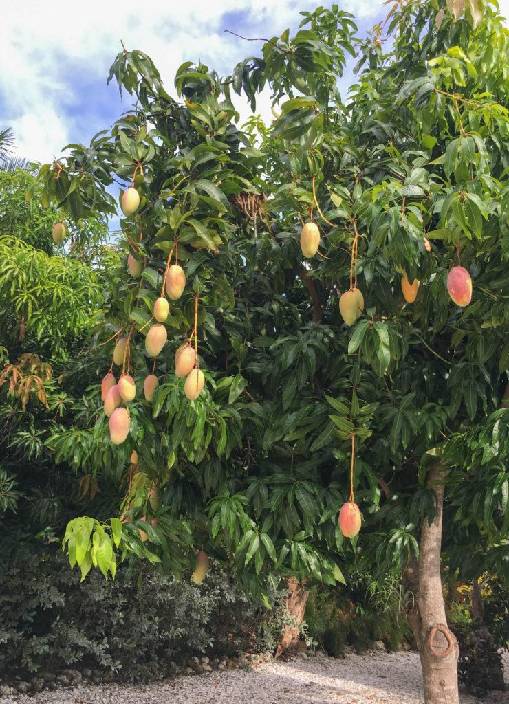 Valencia Pride Tree