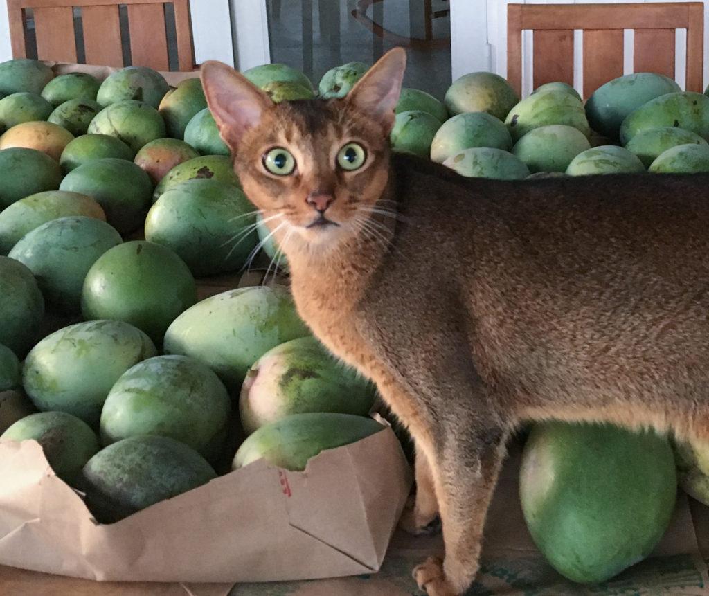 mangocat