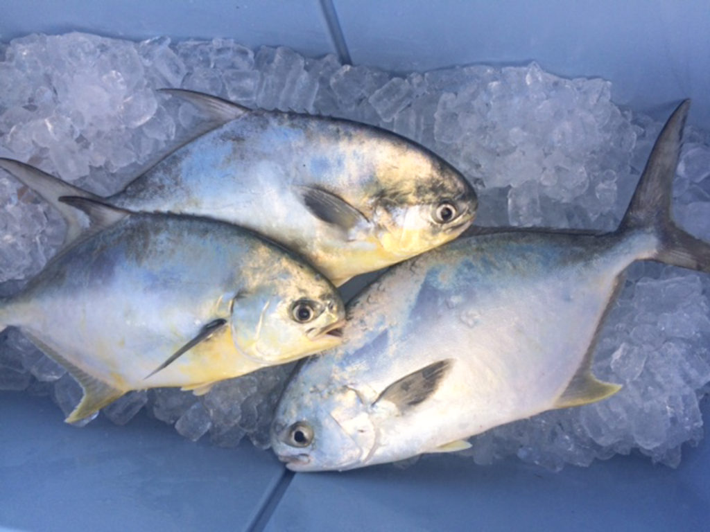 Pompano en papillote suwannee rose for Pompano fish good to eat