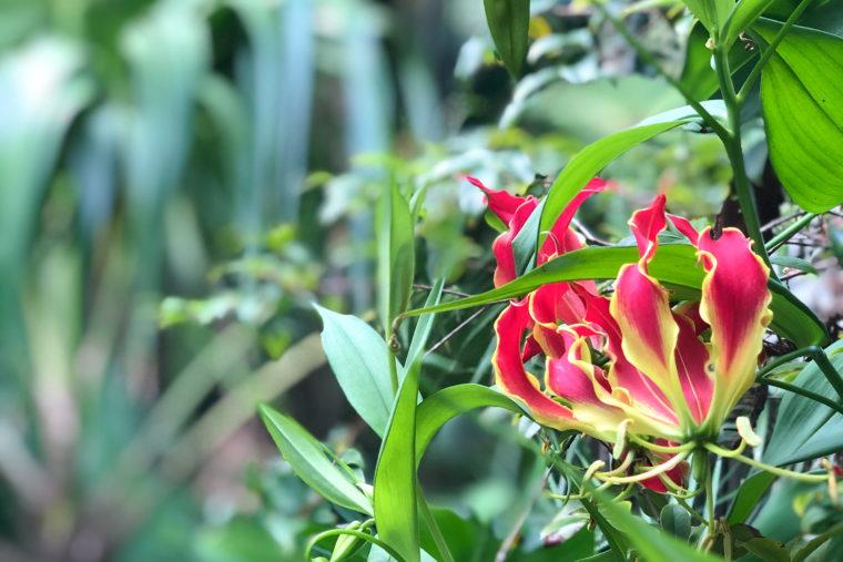 September in Bloom
